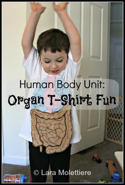 preschool human body study tshirt