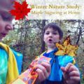 winter study maple sugaring at home