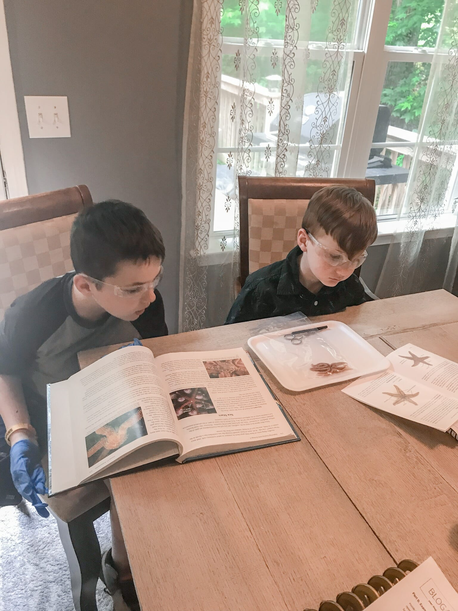 apologia young explorers review